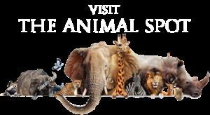 The Animal Spot
